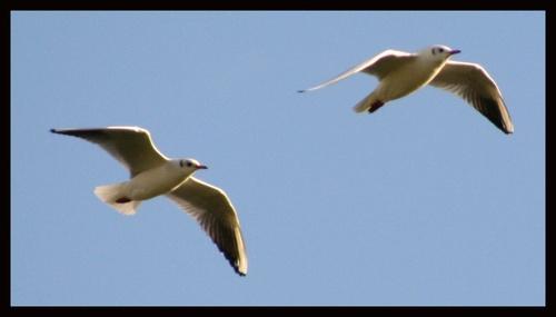 fly high by Sarahmann