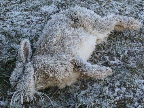 global warming? by allansutcliffe