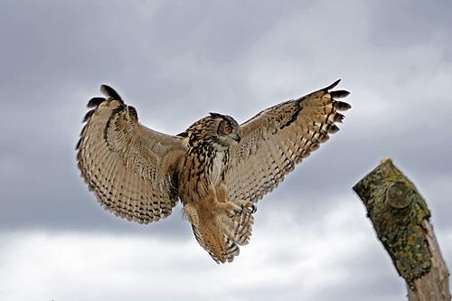 Landing by photographerjoe