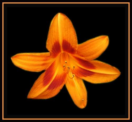 Glowing orange bloom by Sina