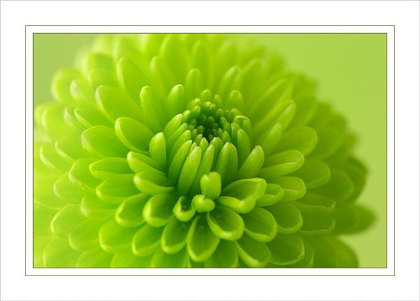 Green II by Ewan