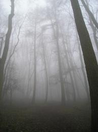 Solstice Mist