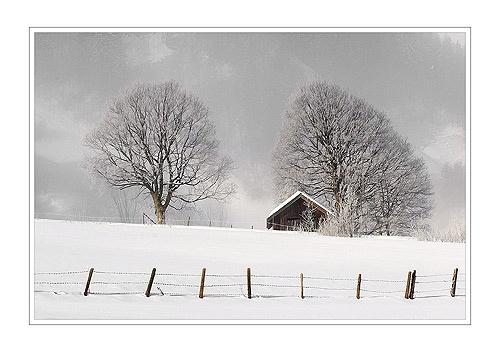 White Dream by katomy