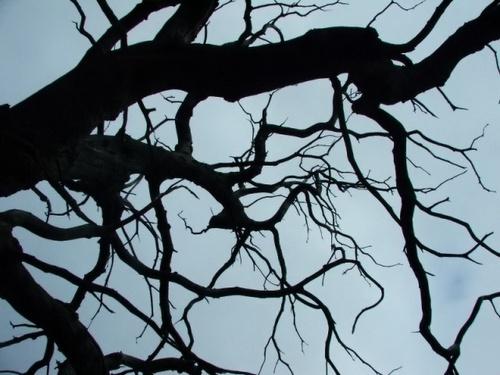 Tree silhouette by iainpb