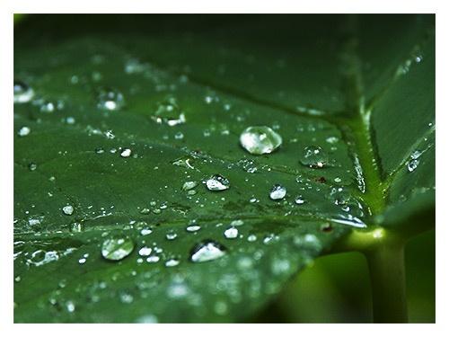 ...drops of grey 2... by samartini