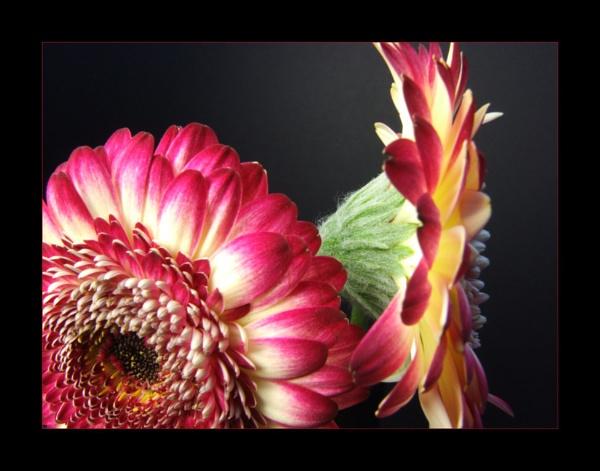 flower 128 by lizziew