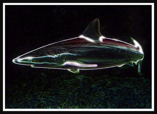 "\""Arty\"" the shark by Sina"
