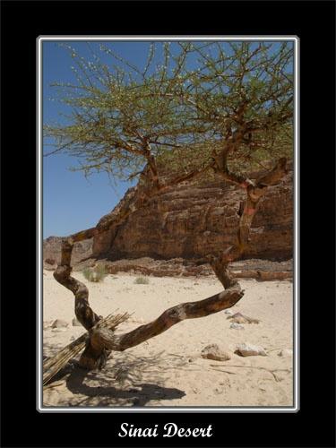 Sinai Desert by JCowlan