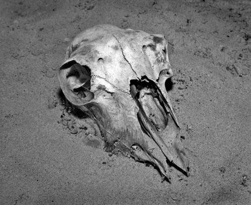 Desert Death by gpwalton