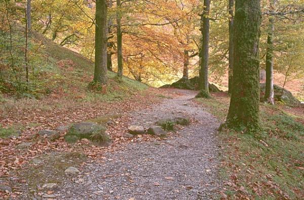 Grasmere Autumn by bill j