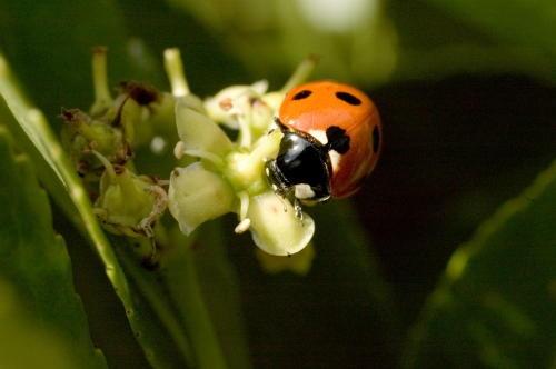 Ladybird by davereet