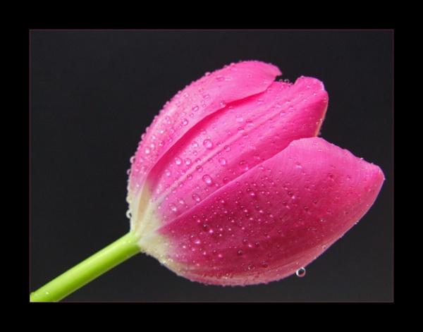 flower 129 by lizziew