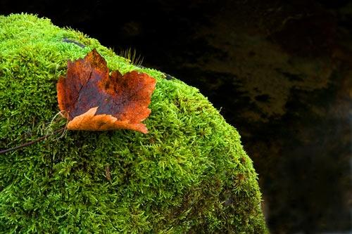 Crispy Leaf by MattB