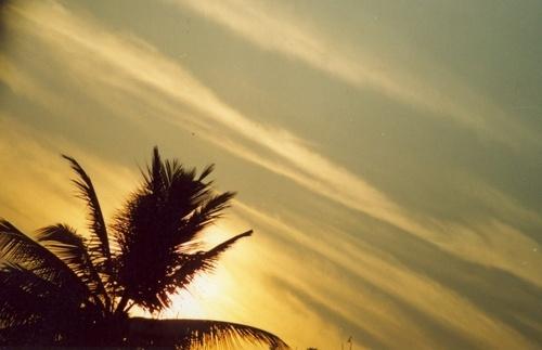 sunset-tree by rajasekaranamie