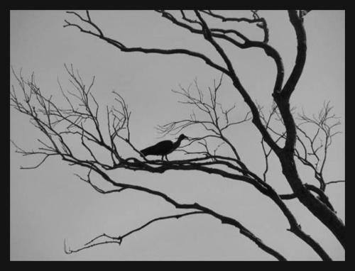 Lonesome bird by Sina