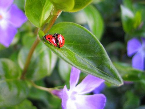 Man and Ladybird by davenewt