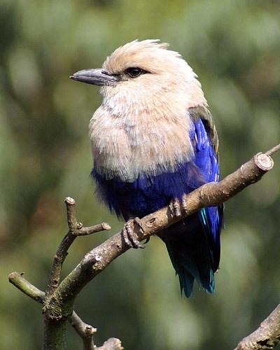 Bird 1 by RSaraiva