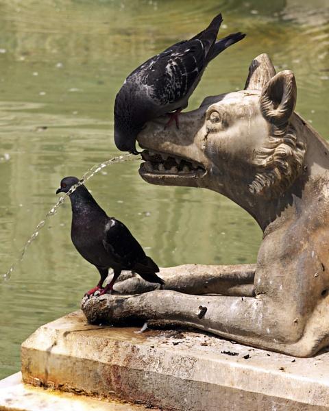 Drinking Bird by ahollowa