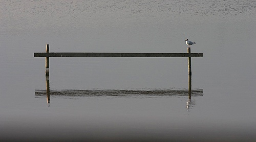 Composition with gull by autarky