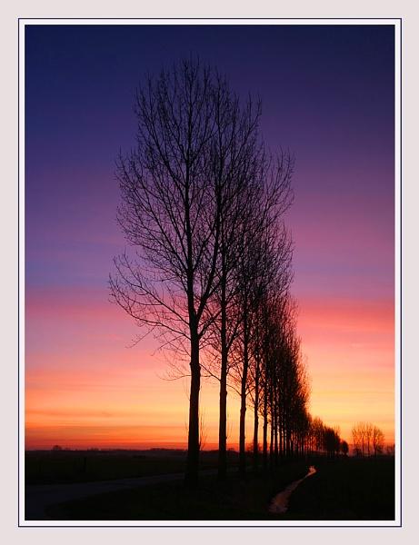 Tree Lined Sunrise by conrad