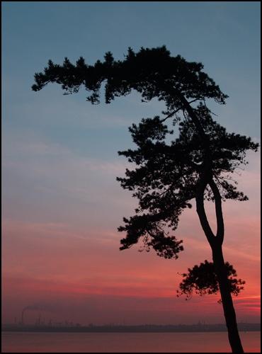 Sunset Silhouette by peterhorner