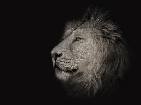 His Majesty by solkku