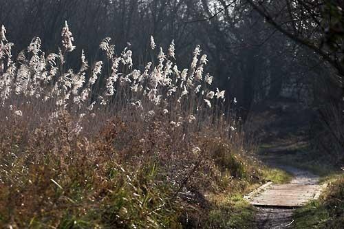 Thatcham Reeds by gary_k