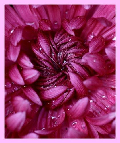 I like purple by leslie168