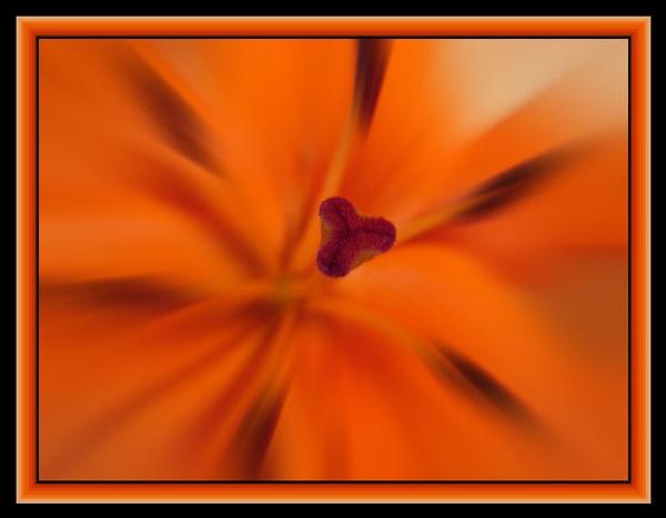 Orange Burst by lilipolala