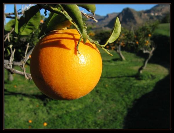 Jani\'s Orange by GavMc