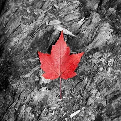 Canada by ghibby