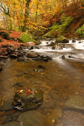 Autumn past by Sago