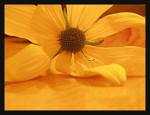 Yellow Flower 1 by RSaraiva