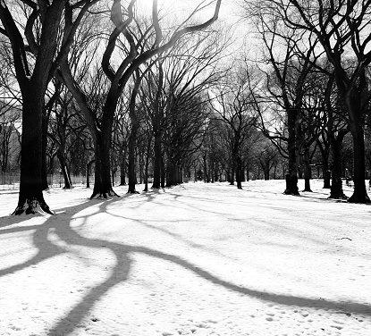 Park Light by martynj