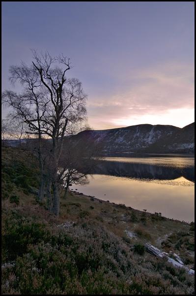 Lochside Tree by amaryllis