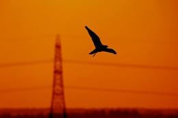 Peregrine Sun Set