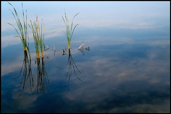 Mattamuskeet  Lake by ardbeg77