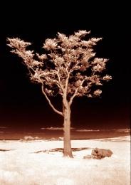 Tree IR