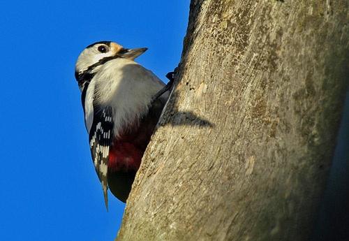Woodpecker at Tyresta National Forest by demetrio