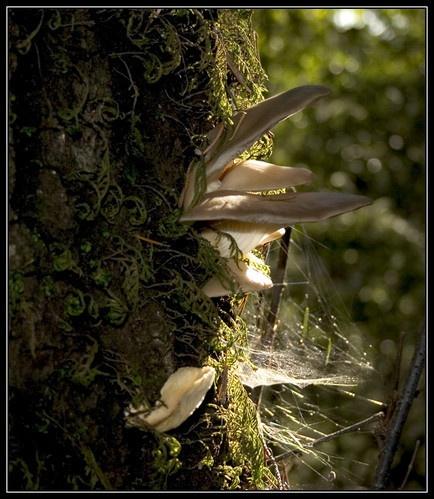 Mushroom Web by liparig