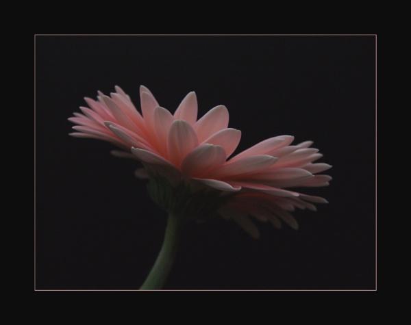 flower 131 by lizziew