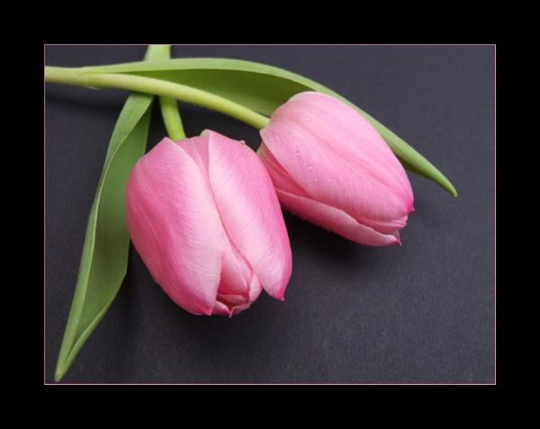 flower 132 by lizziew