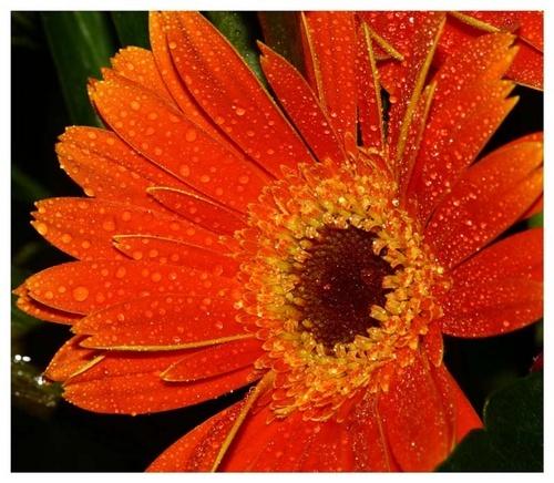 flower by leslie168