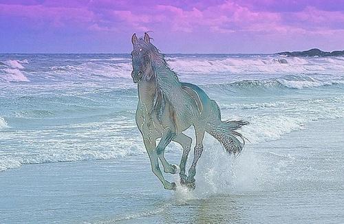 Ghost Stallion by Sakkie