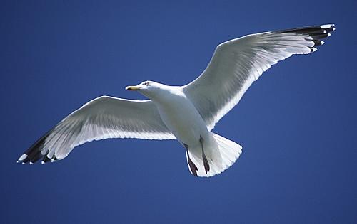See Through Wings by Nigel_95