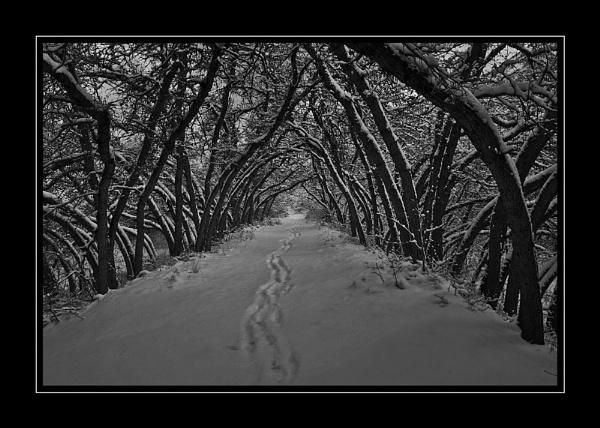Oak Tunnel by billma