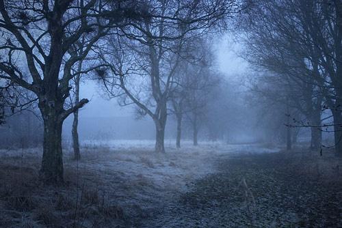 The Fog by stevenr
