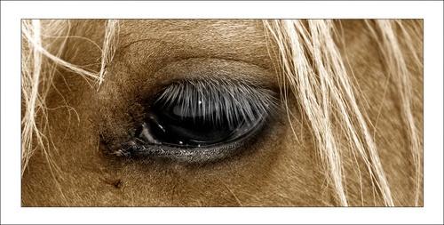 Horse eye by C_Daniels