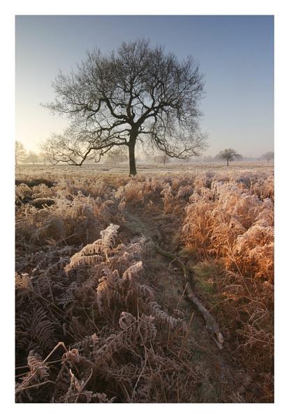 Frosty Morning by itsasetamendi