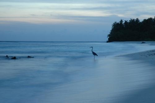 Heron Beach by Bexphoto